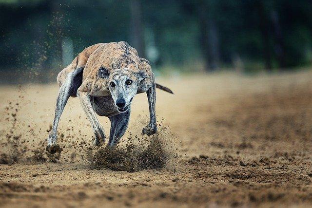 Tips på intressanta sporter och event att betta på som hundägare